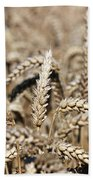 Wheat Close Up Summer Season Beach Sheet