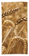 Wheat Ears 1 Beach Towel