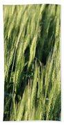 Wheat Beach Towel