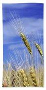 Wheat Trio Beach Towel