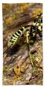 Whip Tailed Wasp Beach Towel