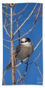 Whiskey Jack Perched On A Winter Larch  Beach Towel