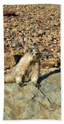 Whistle Pig Of The Rockies Beach Towel
