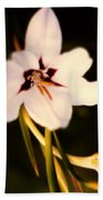 White And Purple Lily Beach Towel