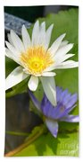White And Purple Lotus Flowers At Golden Mount Beach Towel