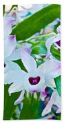 White And Purple Orchids In Greenhouse At Pilgrim Place In Claremont-california Beach Towel