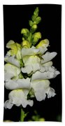 White And Yellow Snapdragon Beach Towel