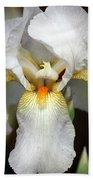 White Bearded Iris 2 Beach Towel