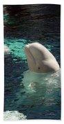 White Beluga Whale 3 Beach Towel