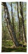 White Birch Forest Beach Towel