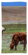 White Buffalo Beach Towel