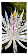White Cactus Flower Beach Sheet