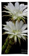 White Cactus Flowers Beach Towel