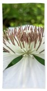 White Clematis Flower Garden 50146 Beach Towel