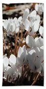 White Cyclamen Beach Towel