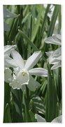 White Daffodils  Beach Towel