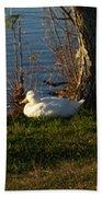 White Duck Resting Beach Towel