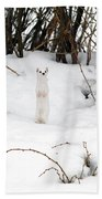 White Ermine Beach Towel