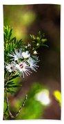 White Flowers Of Kunzea Ambigua Beach Towel