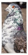 White-gray Pigeon Profile Beach Towel