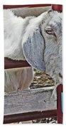 White/grey Goat Head Through Fence 2 6242018 Goat 2420.jpg Beach Towel