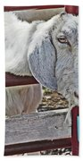White/grey Goat Head Through Fence 2 6242018 Goat 2420.jpg Beach Sheet