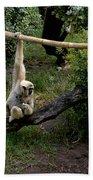 White Handed Gibbon 1 Beach Towel