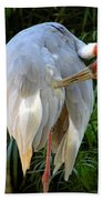White Ibis At The Zoo Beach Towel