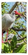 White Ibis In Tree Beach Towel by Bob Slitzan