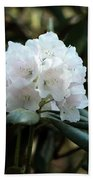 White Inflorence Of  Rhododendron Plant Beach Towel