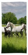 White Lipizzaner Mares Horse Breed With Dark Foals Grazing In A  Beach Towel