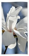 White Magnolia  Beach Towel by Elena Elisseeva