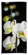 White Orchid On Black Bw Beach Towel