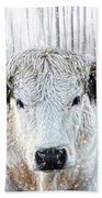 White Park Cattle In The Snow Beach Towel