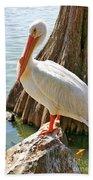 White Pelican By Cypress Tree Beach Towel
