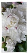 White Peony With Red Traces Beach Towel