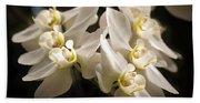 White Phalaenopsis Blossom Beach Towel