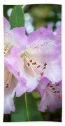White Rhododendron Flowers With A Purple Fringe Beach Towel