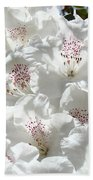 White Rhododendrons Flowers Art Prints Baslee Troutman Beach Towel