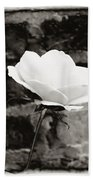 White Rose In Black And White Beach Towel