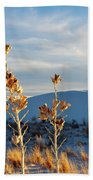 White Sands Yucca Row Beach Towel