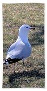 White Seagull Beach Towel