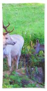 White Stag And Hind 2 Beach Towel
