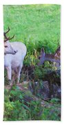 White Stag And Hind Beach Towel