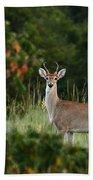 White-tail Buck Through The Trees Beach Towel