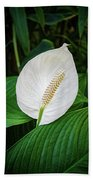 White Tail-flower Beach Towel