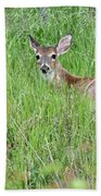 White-tailed Deer Bedded Down In Tall Grass Beach Towel