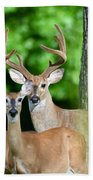 White-tailed Deer Family Beach Towel