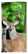 White-tailed Deer Family Beach Sheet