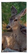 White-tailed Deer H1829 Beach Towel